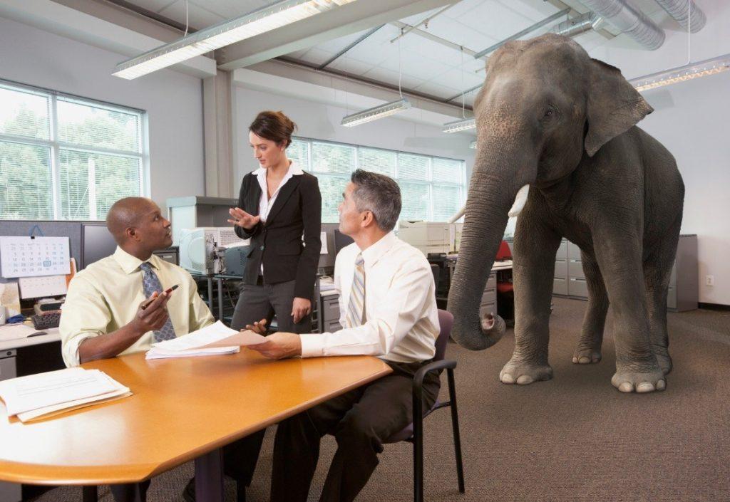 Elephant in Office 1